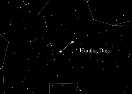 Star Sign Hunting Dogs