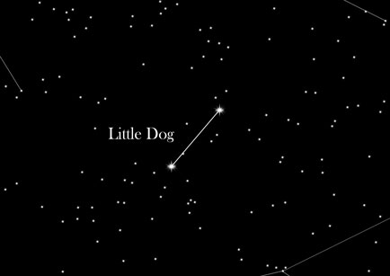 Star Sign Little Dog