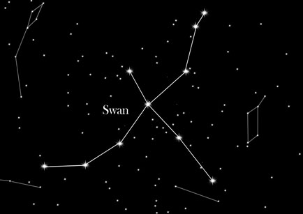 Star Sign The Swan